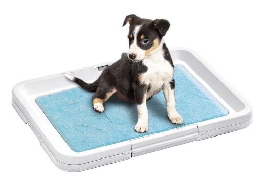 Puppy Potty Welpen WC -k-