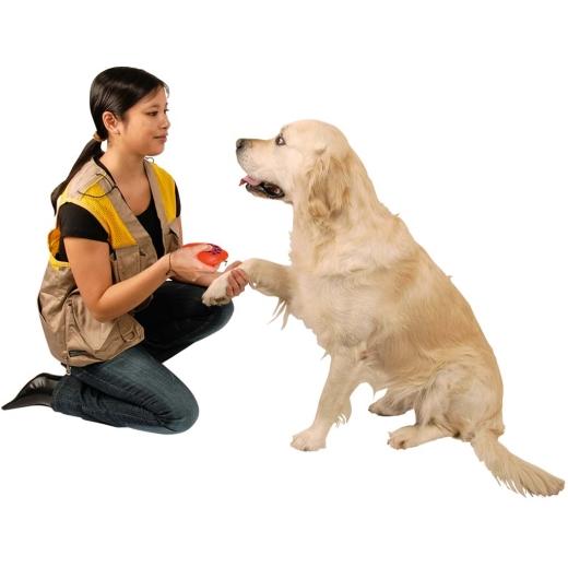 Clicker Hundepfeife Snackbox - Doggy Coach 3-in-1