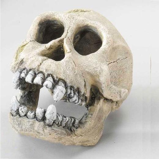 AFFEN-SCHÄDEL Deko Totenkopf Schimpanse