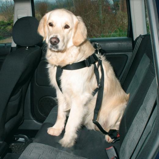 Dog Protect Sicherheitsgurt (XL)