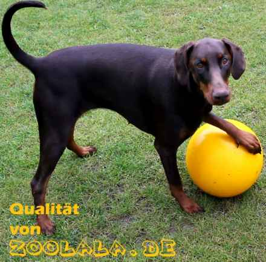 Der RIESENHIT Spielball für Hunde