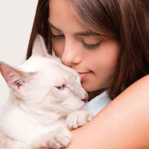 Themenwelten für den Katzenfreund