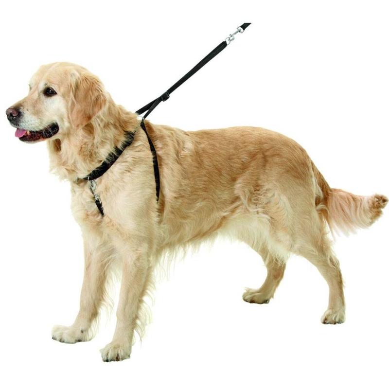 Der Hund zieht NICHT mehr Gentledog ~ Staubsauger Zieht Nicht Mehr