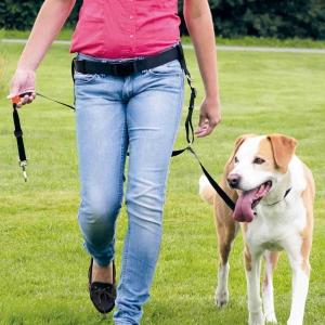 DVD Hundetraining mit Martin Rütter