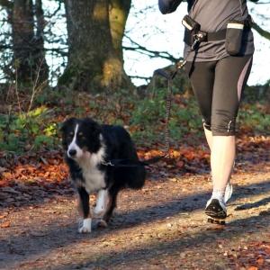 Trixie Joggingleine Bauchgurt mit Leine
