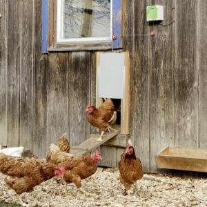 Automatische Hühnertür Komplett-Set, inkl. Schiebetür 300 x 400 mm