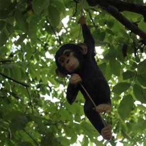 Schimpanse Affe hängend