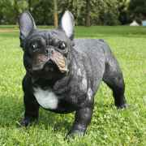 Deko französische Bulldogge black